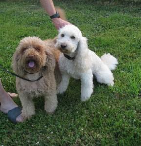 Annie and Laddie on honeymoon, taken 6-21-16_1