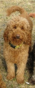 Copper Penny age 2 yrs. April 2013